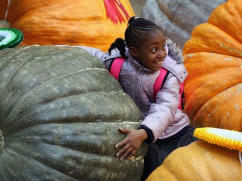 , From pumpkins to policies: engaging in sustainable food behaviour, The Circular Economy, The Circular Economy