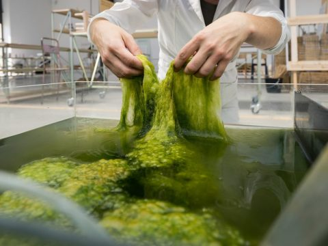 , Margarita Talep Develops Algae-Based Alternative to Single-Use Plastic Packaging, The Circular Economy
