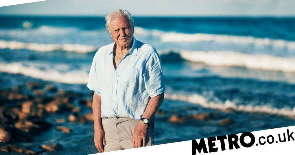 , 'Attenborough effect' leads to 53% drop in single use plastic in 12 months, The Circular Economy, The Circular Economy