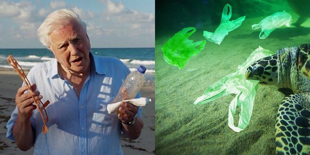 """More People Than Ever Are Ditching Single Use Plastics Thanks To The """"Attenborough Effect"""", The Circular Economy"""
