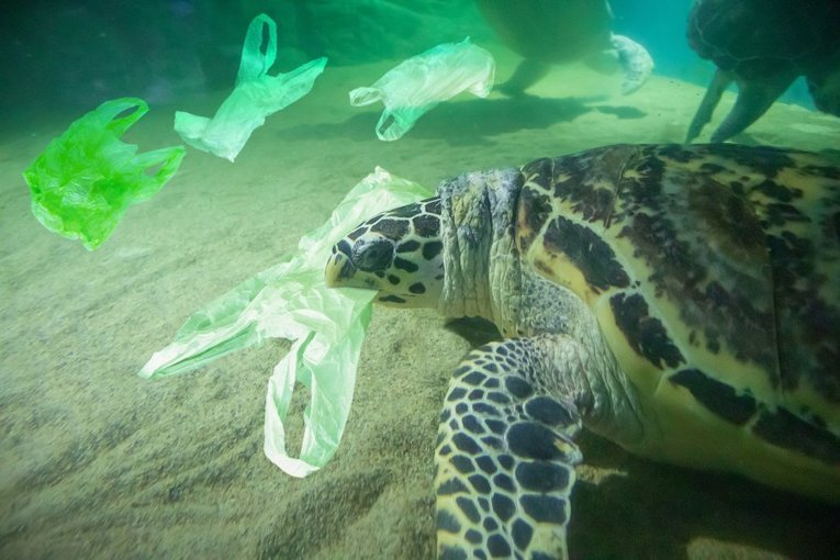 , New Zealand Becomes Another Country That Says No To Single-Use Plastic Bags, The Circular Economy, The Circular Economy