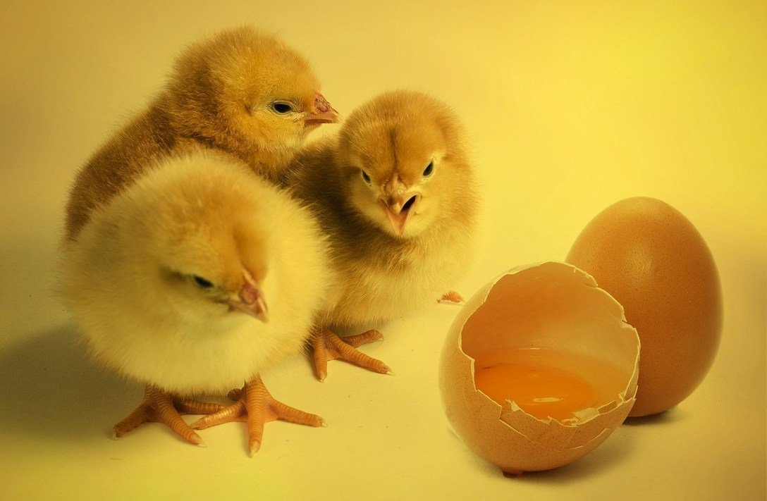 , Sustainability, animal welfare, and Easter eggs, The Circular Economy, The Circular Economy