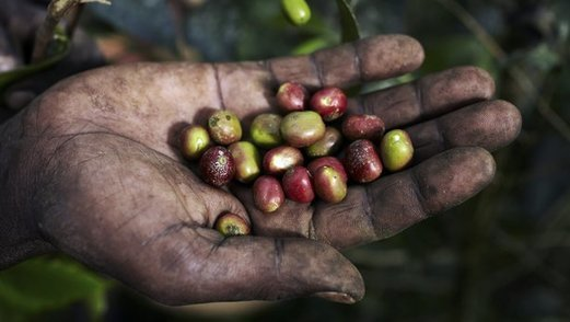 , Sustainability of global coffee production 'at risk', The Circular Economy, The Circular Economy