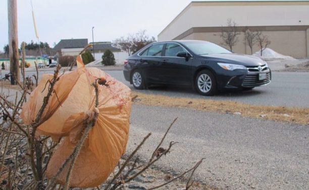 , Maine Senate votes to ban single-use plastic bags, The Circular Economy, The Circular Economy