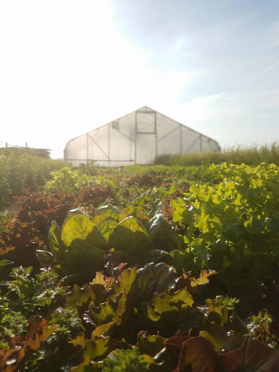 , Urbana farm practices sustainability, The Circular Economy, The Circular Economy