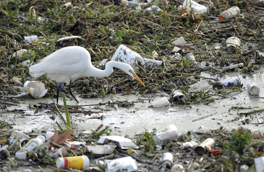 , Canada wants to ban single-use plastics. Would it make a difference?, The Circular Economy