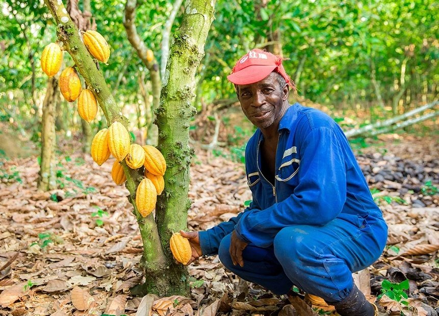A New Ally in Cocoa Sustainability, The Circular Economy