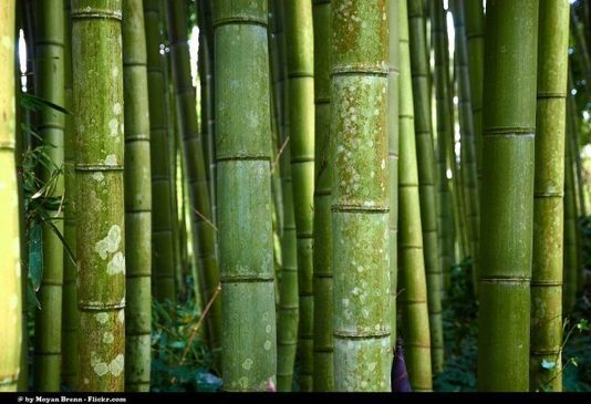 , Bamboo, A Sustainability Powerhouse, The Circular Economy