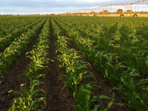 , Corn grower declares war on waste by eliminating millions of single-use plastic trays, The Circular Economy, The Circular Economy