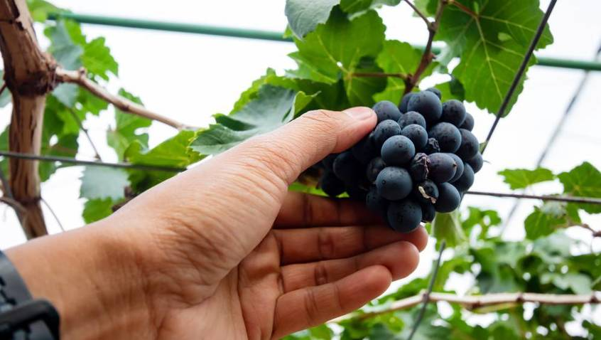 , Hunter Vineyards – Ignoring sustainability is not an option, The Circular Economy, The Circular Economy