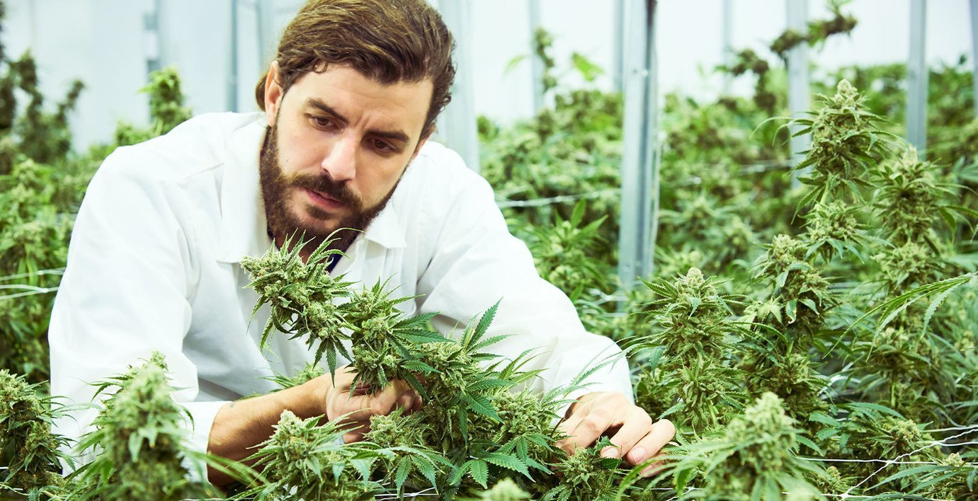 , Shift Cannabis: The Cultivation Epitome of Quality & Sustainability, The Circular Economy, The Circular Economy