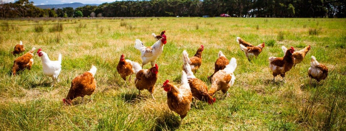 , The key to poultry sustainability, The Circular Economy, The Circular Economy
