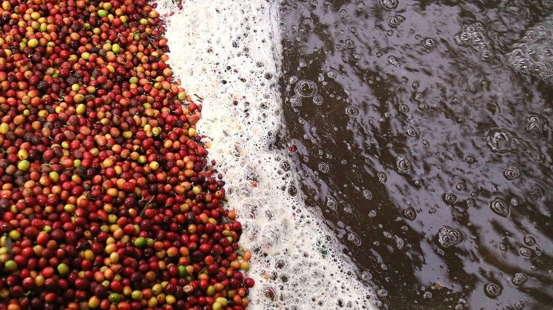 , The Biggest Coffee Sustainability News of 2018, The Circular Economy