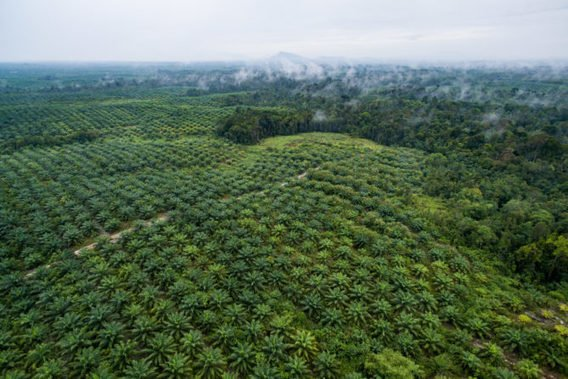 , Can palm oil enter the circular economy?, The Circular Economy, The Circular Economy