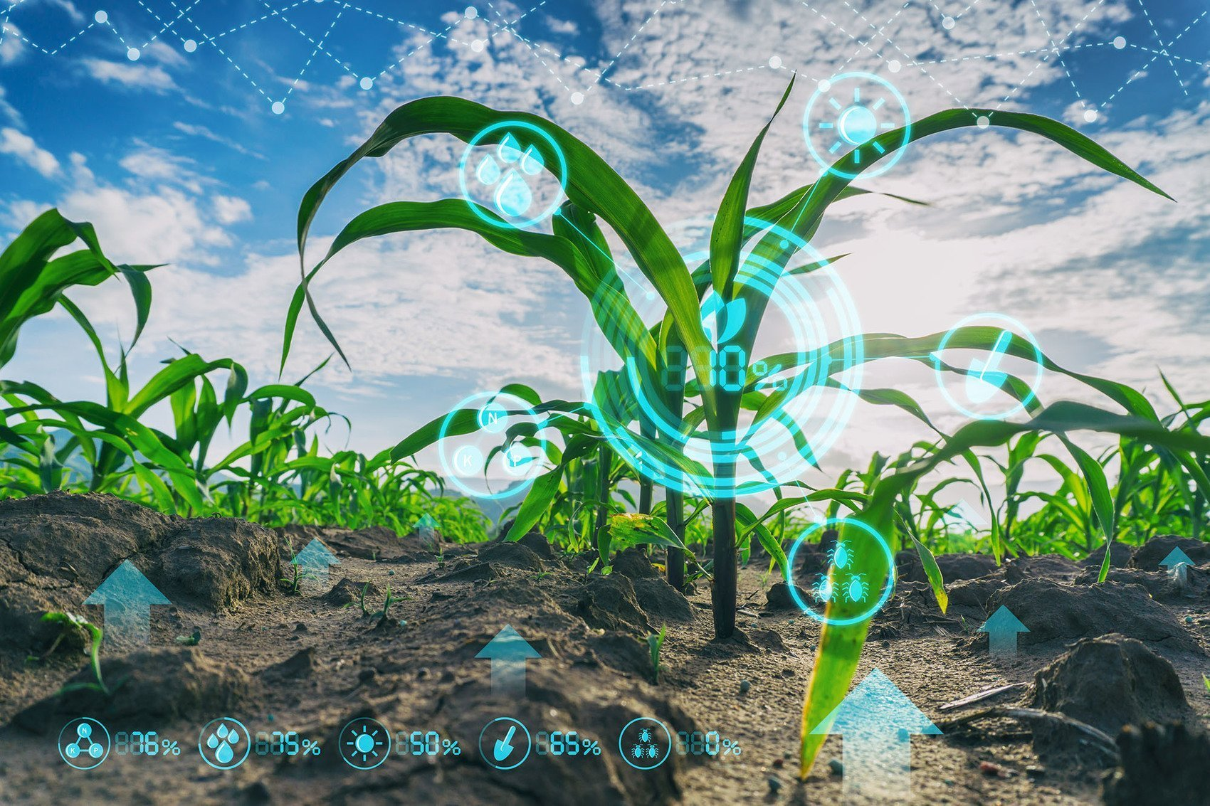 , Bayer strives for sustainability for farmers and consumers, The Circular Economy, The Circular Economy