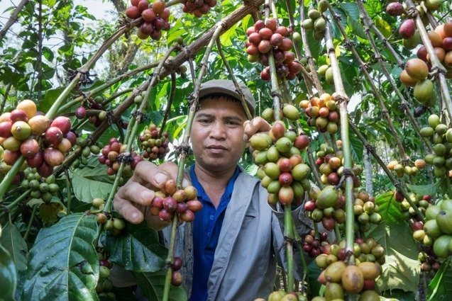 , Colombian Coffee Farming and Its Sustainability, The Circular Economy