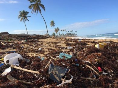 , California Bill Proposes To Reduce and Recycle 75% of Single-Use Plastics By 2030!, The Circular Economy, The Circular Economy