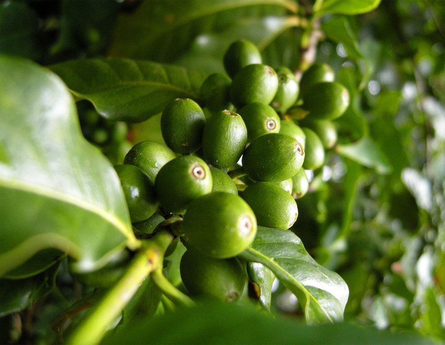 Resolutions for Myself and for the Coffee Sustainability Sector, The Circular Economy