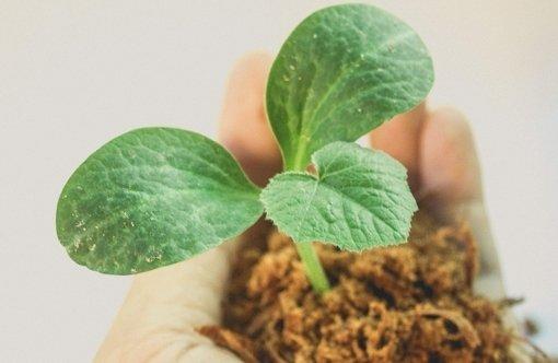 , AmityUniversity Gurugram teaches sustainability, The Circular Economy, The Circular Economy