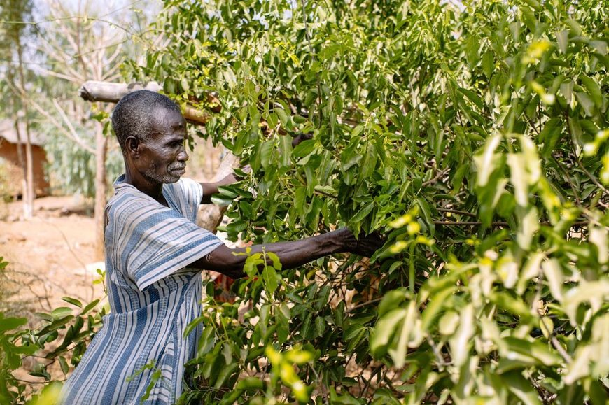 , Agroforestry: Development underdog headed for center stage in global sustainability efforts, The Circular Economy