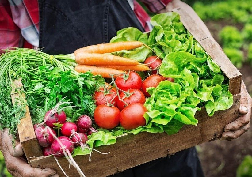 , Seasonal diets could be the answer to food sustainability, The Circular Economy, The Circular Economy