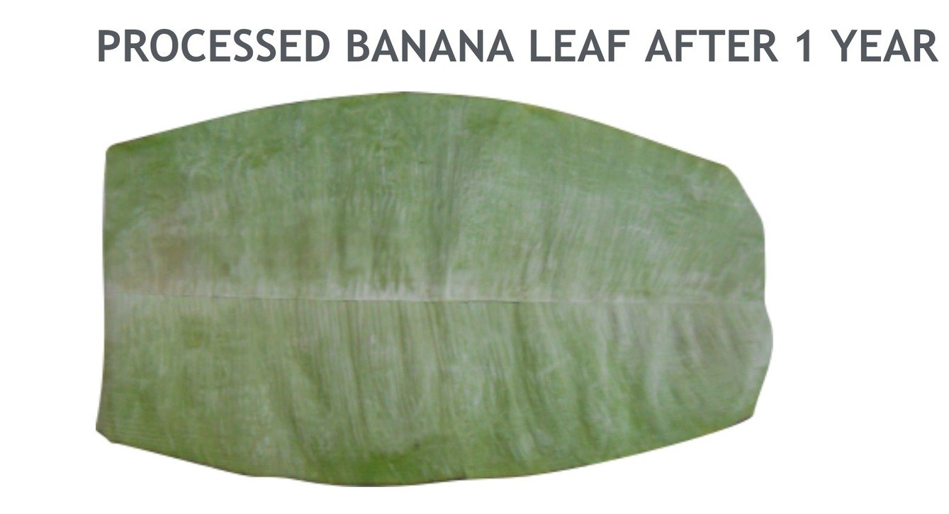 , Could Banana Leaf Technology Squelch Our Use Of Single-Use Plastics?, The Circular Economy