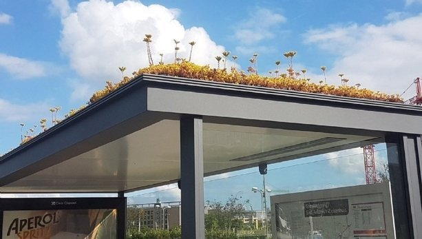 Toyota's solar Prius and bee-friendly bus stops: The sustainability success stories of the week, The Circular Economy