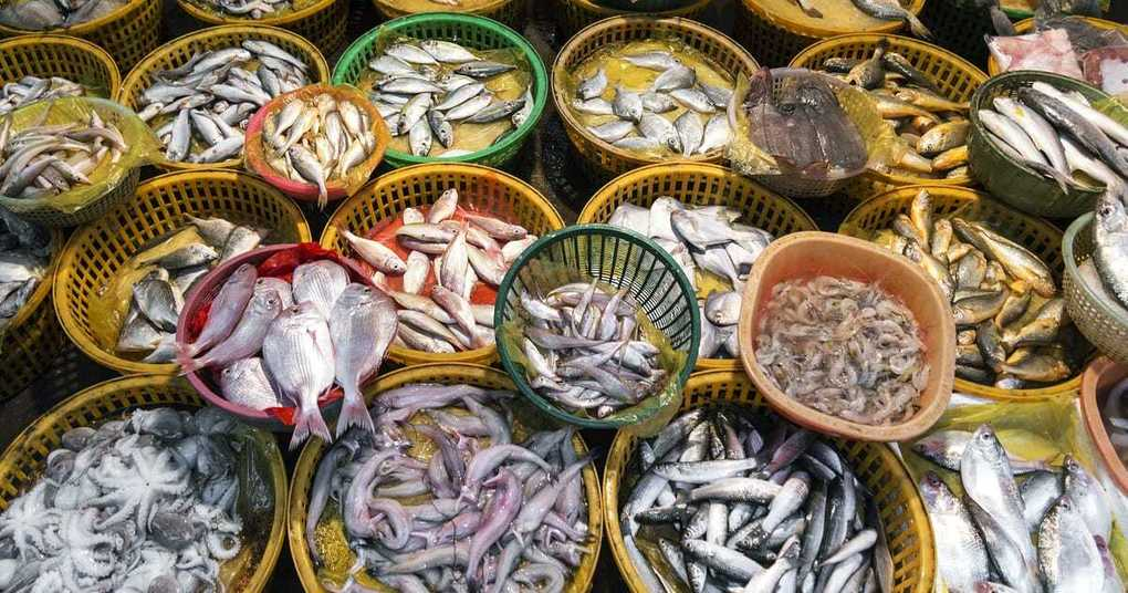 , New tool for measuring seafood sustainability, The Circular Economy