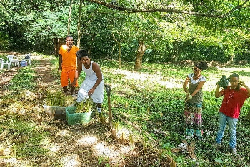 Vetiver Grass project spreads its roots into sustainability and conservation, The Circular Economy