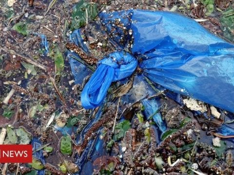 , Could this 'biodegradable bag' cut plastic pollution?, The Circular Economy, The Circular Economy