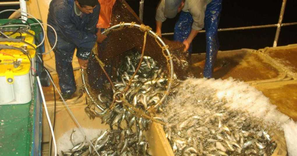 , Sustainability breakthrough for African and Asian reduction fisheries, The Circular Economy, The Circular Economy