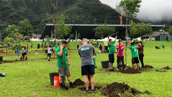New trees, sustainability certificate at Windward CC, The Circular Economy