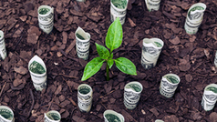 , ESMA releases sustainable finance strategy, The Circular Economy, The Circular Economy