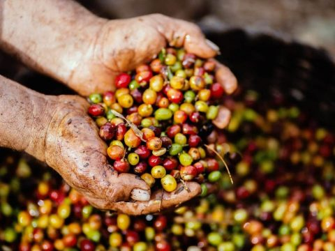 , Opinion | Making Coffee Sustainable –, The Circular Economy, The Circular Economy