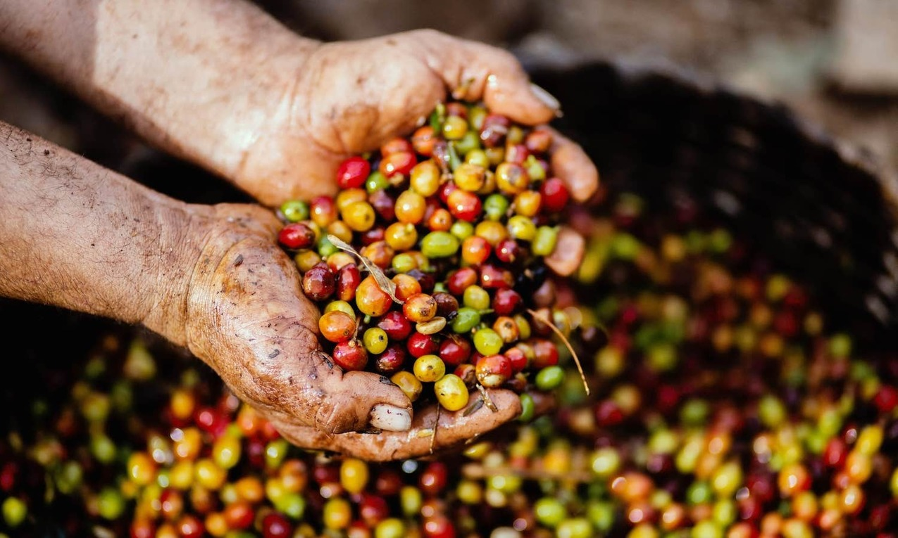 , Opinion | Making Coffee Sustainable –, The Circular Economy