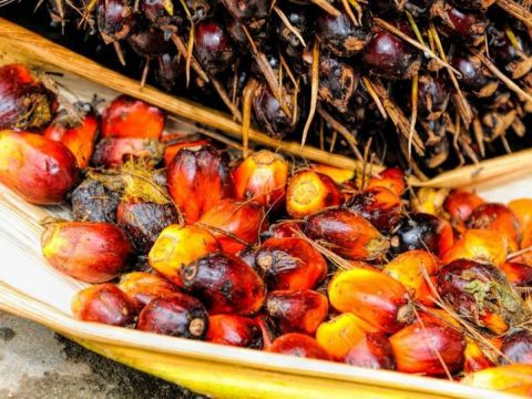 , 'Sustainable palm oil is the best solution to deforestation', The Circular Economy