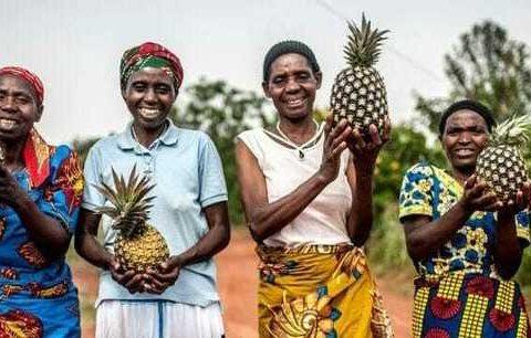 , sustainable livelihoods land Jim Clarken, Oxfam Ireland, The Circular Economy, The Circular Economy