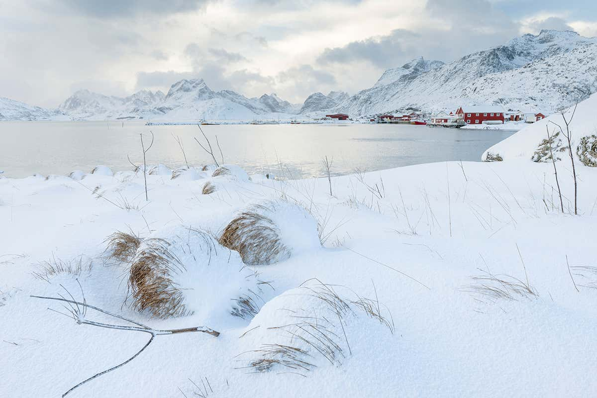 , Deep and crisp and living: How snow sustains amazing hidden life, The Circular Economy, The Circular Economy