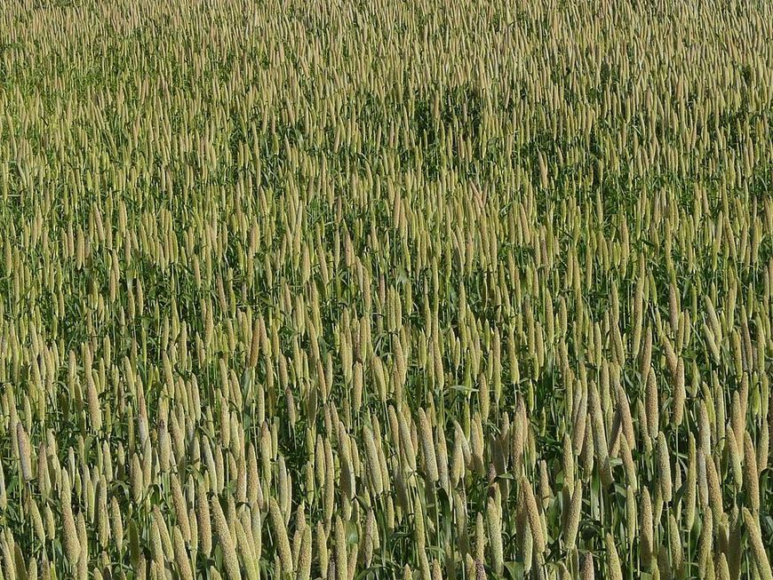 , How Millets sustained Mongolia's Empires, The Circular Economy, The Circular Economy