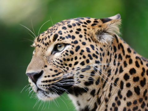 , Supply Chain Sustainability: If a leopard can't change its spots, can supply chains ever be sustainable?, The Circular Economy