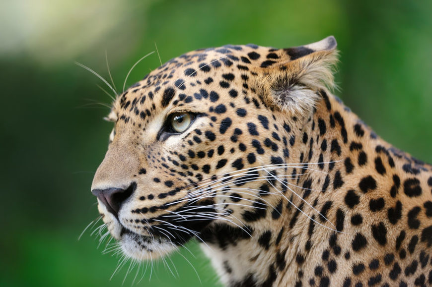 Supply Chain Sustainability: If a leopard can't change its spots, can supply chains ever be sustainable?, The Circular Economy
