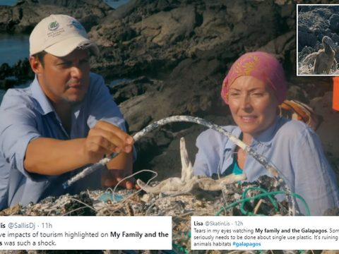 , My Family and the Galapagos: Single-use plastic is threatening life of endangered species of bird | Daily, The Circular Economy, The Circular Economy
