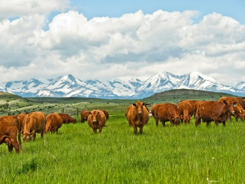 , Harvard alumnus practices sustainable ranching –, The Circular Economy