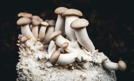 , Fungi-inspired companies could play a new role in sustainability, The Circular Economy, The Circular Economy