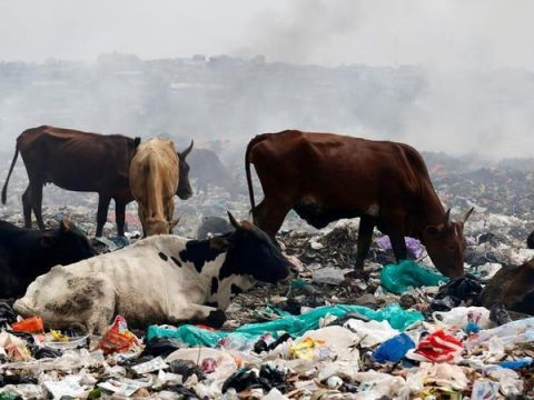 , 'Not enough action from EU on plastic' | Environment| All topics from climate change to conservation | DW | 17.01.2018, The Circular Economy, The Circular Economy