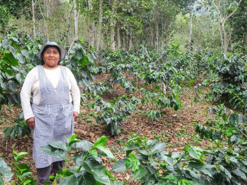 , Sustainable Sourcing, The Circular Economy, The Circular Economy