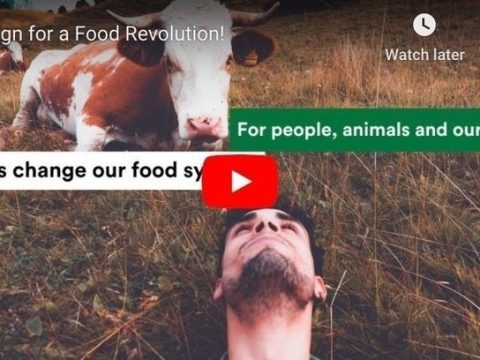 , Pétition · Join the Worldwide Call for a Safe, Sustainable & Compassionate Food System ·, The Circular Economy