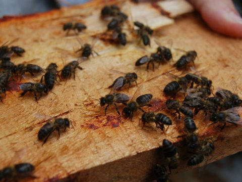 , Save Bees and Support Sustainable Livelihoods in Rural Madagascar, The Circular Economy