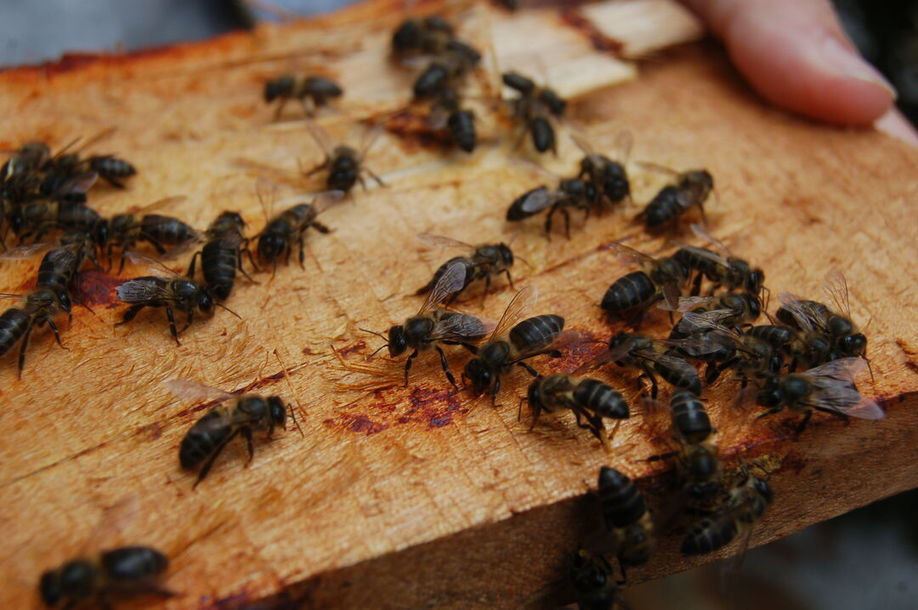 , Save Bees and Support Sustainable Livelihoods in Rural Madagascar, The Circular Economy, The Circular Economy