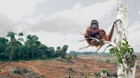 , Pétition · Make Sustainably Sourced Palm Oil a Legal Requirement ·, The Circular Economy, The Circular Economy